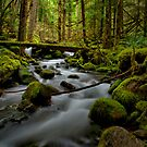 Lost Creek Glow by Charles & Patricia   Harkins ~ Picture Oregon