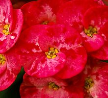 Floral Calendar by Neha  Gupta
