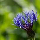 purple flower  by Oliver  Monk
