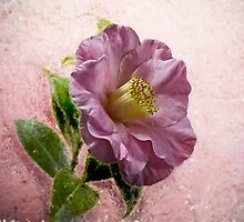 Pink by BoB Davis