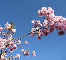 Is this the Last of the Blossom? by Braedene