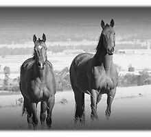 Horse Power by RodMC
