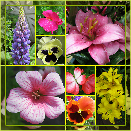 Lupin, Lilies, Geraniums and Pansies Collage by BlueMoonRose