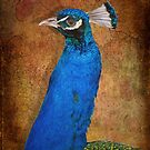 Peacock by AD-DESIGN