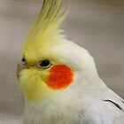 Cockatiel Blush :) by Penny Smith