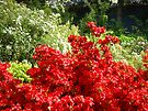 Landscape Botantanical Red Rhododendron Flowers by BasleeArtPrints