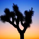 Joshua Tree At Sunset by Ron Hannah