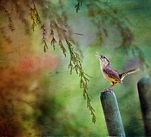 Wren in Willowy Branches by Bonnie T.  Barry