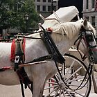 Horse-drawn Carriage in New York City by jamiecwagner
