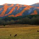 CADES COVE EVENING by Chuck Wickham