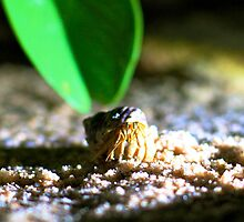 Hermit Crab by h2oImagery