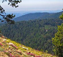 Fresno dome trail near North Fork by David Chesluk