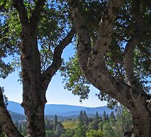 Oaks and hills- Bob's place- North Fork CA by David Chesluk