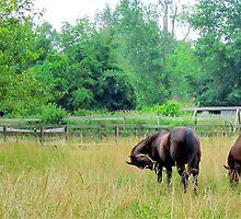 Pasture Scene - Oberlin, Ohio by Fojo