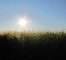 Sun Ripened by Kathi Arnell