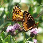 Butterflies by Kathi Arnell