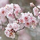 Elegant Blossom by Cathy Middleton