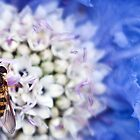 Hover fly on flower  by Matthew Clark