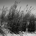 Dune Grass by Neil Messenger