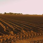 Paddock - Australia by Alison  Eno