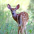 Innocence - White-tailed Deer by Jim Cumming