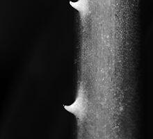 Aloe Vera  by thepathtraveler