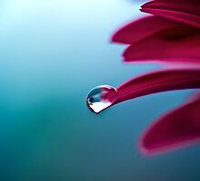 Little droplet by Michaela Rother
