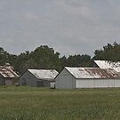 Pasture of Barns by Sheryl Gerhard