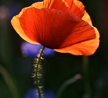 Eternal love poppies . by Brown Sugar .Favorites: 5 Views: 358 .  So happy friends !!! Woo Hoo !!! by © Andrzej Goszcz,M.D. Ph.D