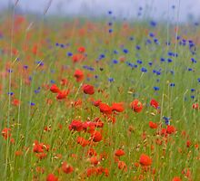Wonderful red&blue . by Brown Sugar . OK ! friends so good !!! Views (390) favorited by (8) Thanks a bunch ! by AndGoszcz
