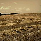 Hay Field by AndreaCT