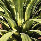 Palm Green by Joy Watson