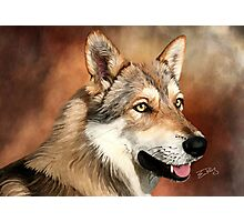 SaarloosWolfdog Photographic Print