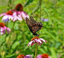 Butterfly in Cones by Eileen McVey