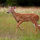 Fawn and Free - White-tailed Deer by Jim Cumming