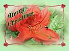 Merry Christmas Orange Azalea Floral by MotherNature