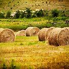 Golden Hay Bales by Tammy Wetzel