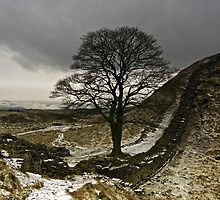 Sycamore Gap at Hadrians Wall by Darren Turner