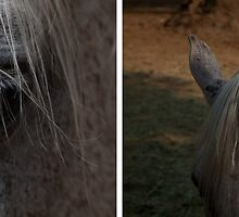 Horses by 2 by Rene Hales