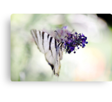 Butterfly's Soft Touch Canvas Print