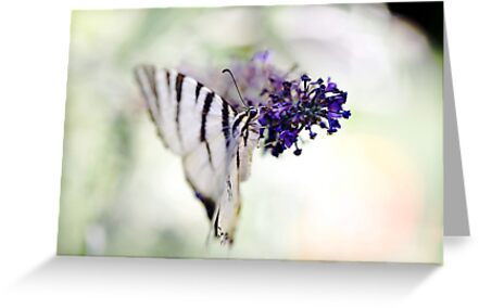 Butterfly's Soft Touch by Hirondelles