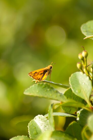 Butterfly After The Rain by Marcelle Raphael