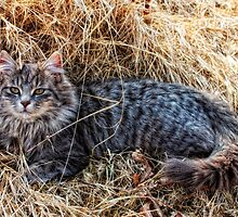 Matilda in the Straw by Sue Justice