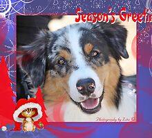 CC2 - Australian Shepherd Dog by zitavaf