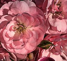 In the Pink with Roses by Joy Watson
