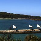 Sitting Gulls by Elisabeth Dubois