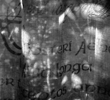 life through a curtain of language by marysia wojtaszek