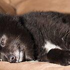 Black Dog by Robby Ticknor