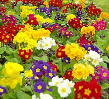 Flower border in multi colours by John Butterfield