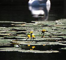 Hello Earth (Kate Bush) by Vein